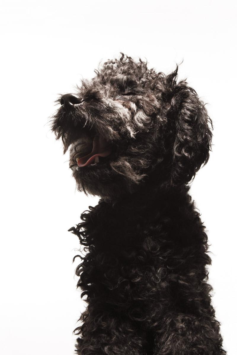 fotografía profesional retrato perro mestizo en buenos aires