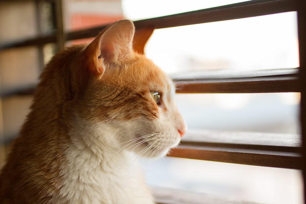 fotografía profesional retrato gato naranja en buenos aires