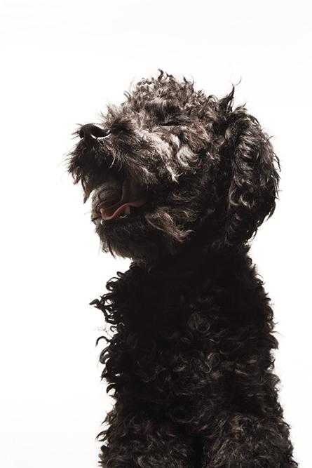 fotografía profesional retrato perro canoiche negro mirando hacia arriba