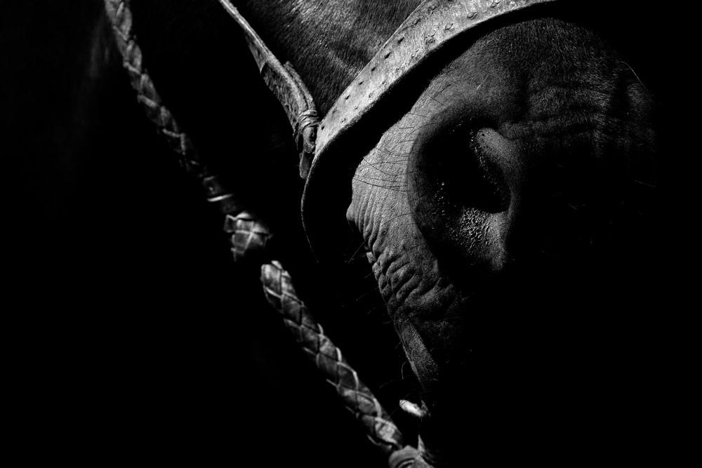 hocico de caballo en blanco y negro