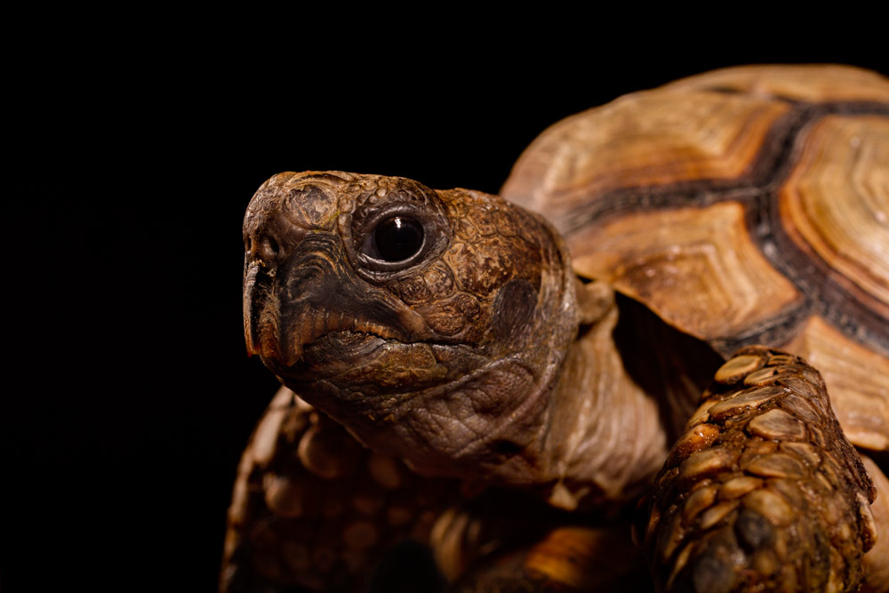 fotografía profesional retrato tortuga en buenos aires