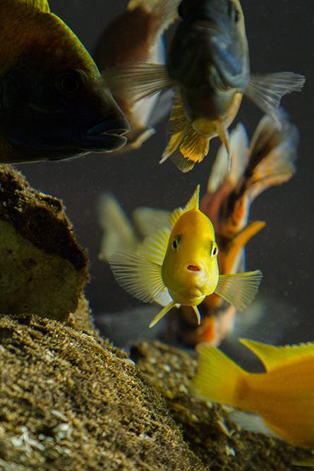 fotografía profesional retrato peces en buenos aires