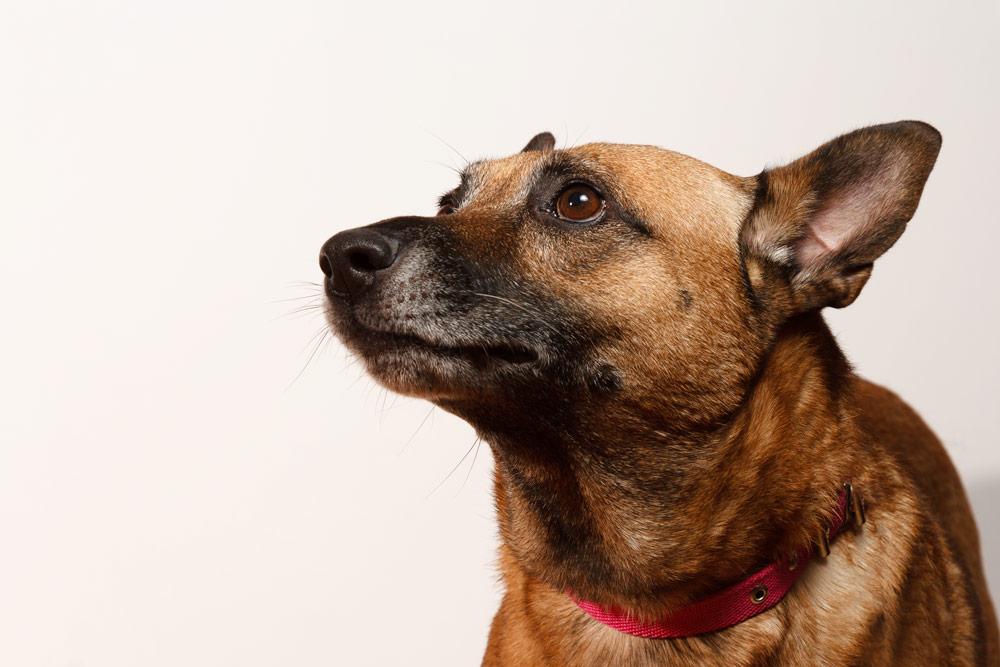 fotografía profesional retrato perra mestiza en buenos aires