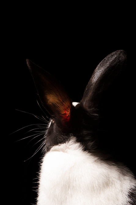 fotografía profesional retrato conejos en buenos aires