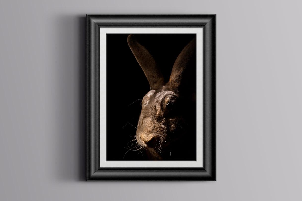 Cuadro de conejo enmarcado