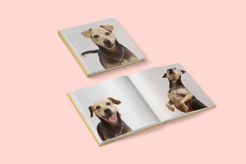 fotolibro con fotos de perro mestizo