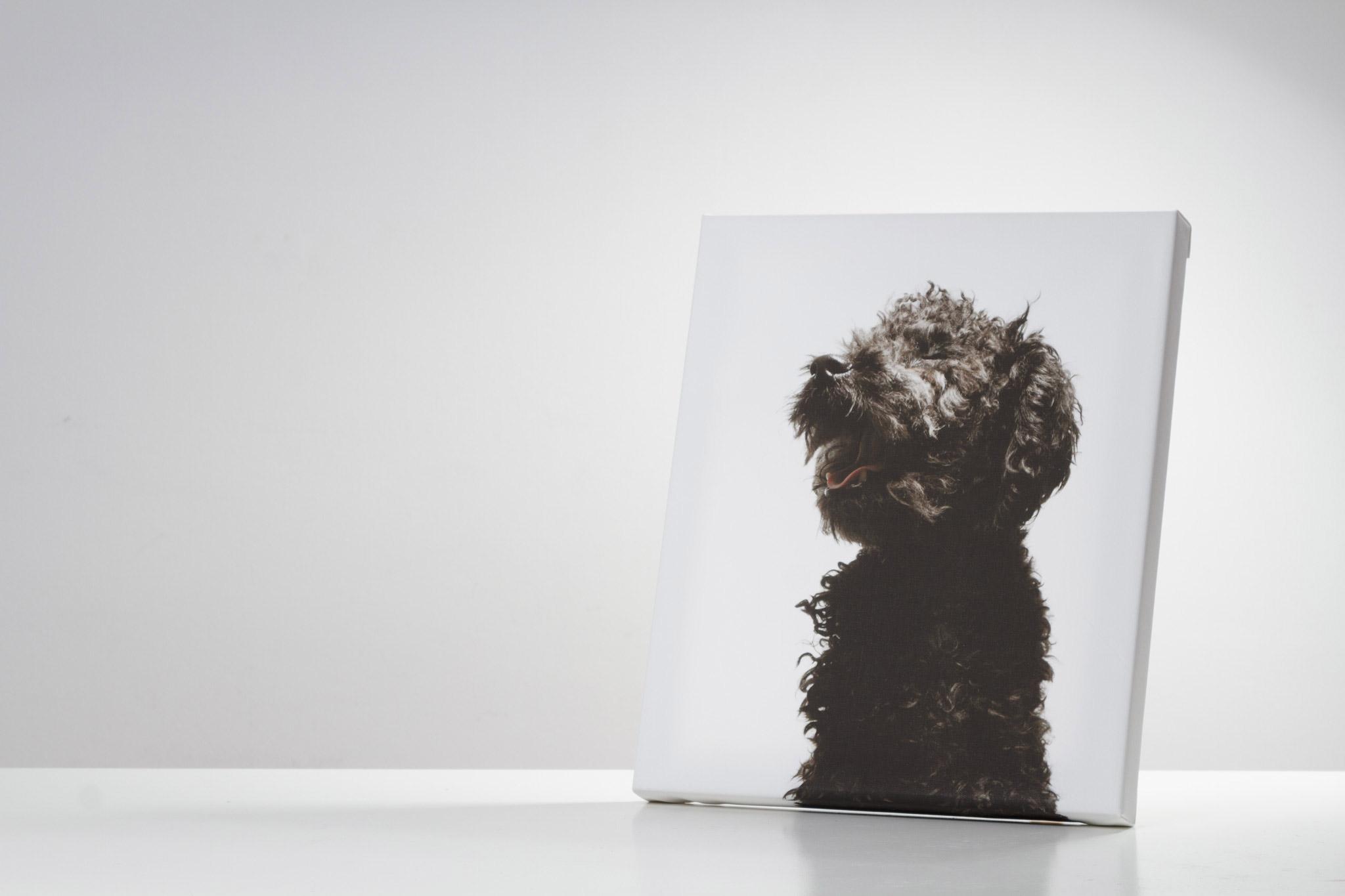 cuadro en canvas de perro caniche