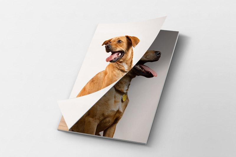 fotomagazine con un perro en la tapa