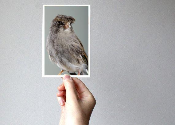 mano sosteniendo una fotografia de un pajarito