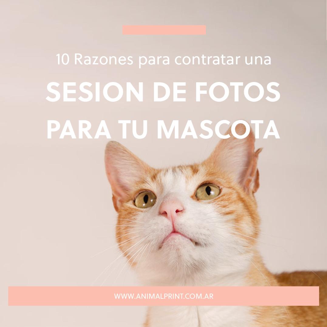 10 razones para contratar una sesión de fotos para tu mascota Animal Print
