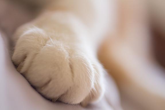 10-razones-para-contratar-una-sesion-de-fotos-para-tu-mascota_animal-print_2