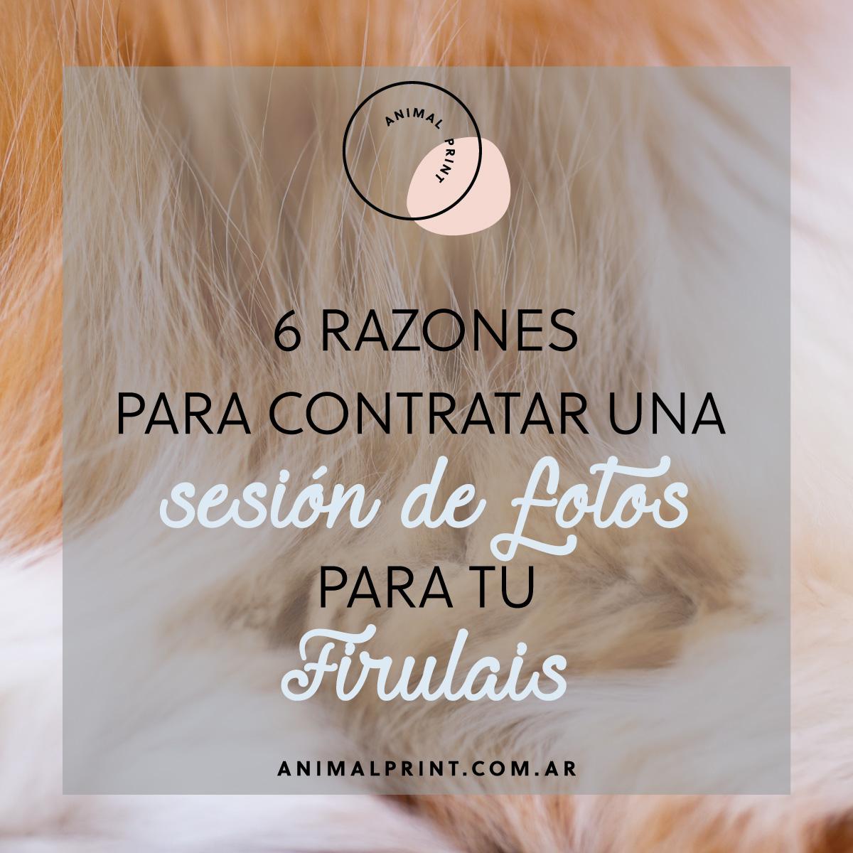 6-razones-para-contratar-una-sesion-de-fotos-para-tu-mascota_animal-print-foto